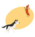 Cute black and white husky dog and sausage vector image