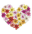 heart of colorful lilies isolated on white vector image