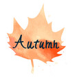 orange maple leaf with hand written sign autumn vector image vector image