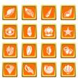 tropical sea shell icons set orange square vector image vector image