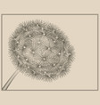 blowball woodcut vector image vector image