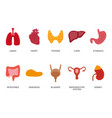 cartoon human organs set with liver pancreas heart vector image vector image