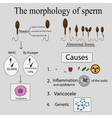 Infographics sperm morphology vector image
