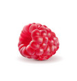 ripe raspberries isolated on white background vector image
