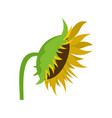 sunflower icon flat style vector image vector image