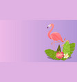 flamingo bird design on white background vector image vector image
