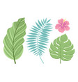 set of tropical leaves isolated on white vector image