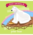 Zoo Animal Polar Bear vector image vector image