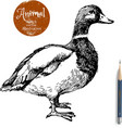 Hand drawn duck animal Sketch isolated vector image vector image