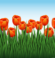 orange tulips vector image vector image
