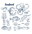 seafood poster and species vector image