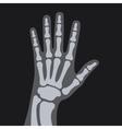 X Rays Style Human Hand vector image vector image