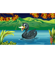 A black swan at the lake vector image