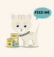 cat with food in flat style vector image