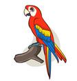 cartoon cute parrot vector image vector image