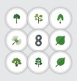 flat icon ecology set of timber rosemary forest vector image vector image
