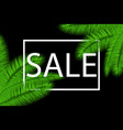 sale banner with palm leaves floral tropical vector image