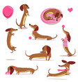 set with cute cartoon dachshund vector image vector image