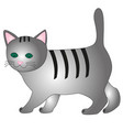 cartoon gray kitten vector image vector image