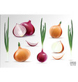 collection onions with slices isolated vector image vector image