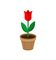 Flower in a pot vector image