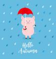 hello autumn pig holding red umbrella rain drops vector image