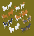 isometric small dog breeds with jack-russell vector image vector image