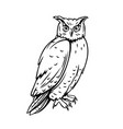 owl bird icon vector image vector image