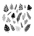 set black trendy doodle exotic leaves on a vector image vector image