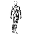 human body anatomy woman vector image vector image