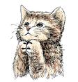 kitten 1 vector image