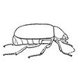 may beetle vintage vector image vector image