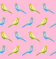 seamless pattern with budgie parrots vector image
