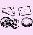 biscuit vector image vector image