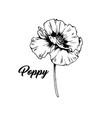 poppy blossom with bud black ink vector image