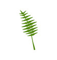 exotic tropical feathery palm leaf botanical vector image vector image