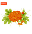 floral composition orange rose flower with leaves vector image vector image