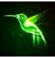 Neon hummingbird vector image