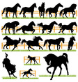 Set of 17 Horses Silhouettes vector image vector image