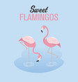 two flamingos in a lake vector image