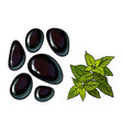 black basalt massage stones and mint leaves spa vector image vector image