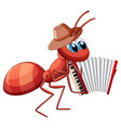 mucian ant playing accordion