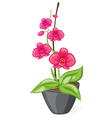 Pink orchid in the pot vector image vector image