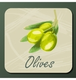 green olive on a branch vector image vector image