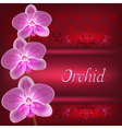 Greeting or invitation card with orchid flower vector image vector image
