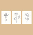 design templates botanical vector image vector image