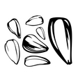 set of sunflower seed vector image vector image