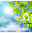 green leaves on sky background vector image vector image