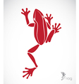 image of a frog vector image vector image