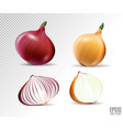 set of fresh whole and half yellow and red vector image vector image